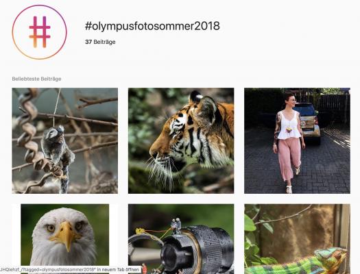 Olympus Fotosommer Case Study - Ergebnis & Feedback 11